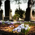 graveyard-church-crocus-cemetery-161280 (1)