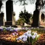 graveyard-church-crocus-cemetery-161280 (1)